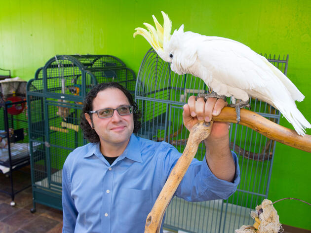 Erik Wolf with Fred the cockatoo at The Perch, the first parrot cafe in the U.S. Mark Reis/The Gazette