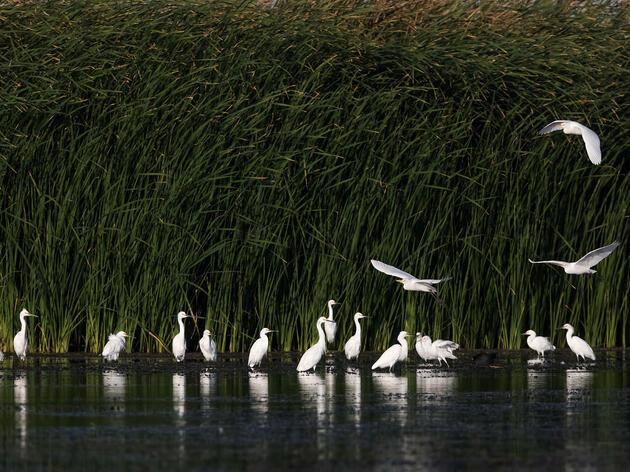 Bird Abundance and Diversity Increase in Colorado River Delta after Pulse Flow