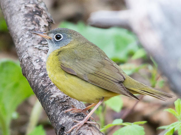 Birdist Rule #99: Make Some New Year's Birding Resolutions