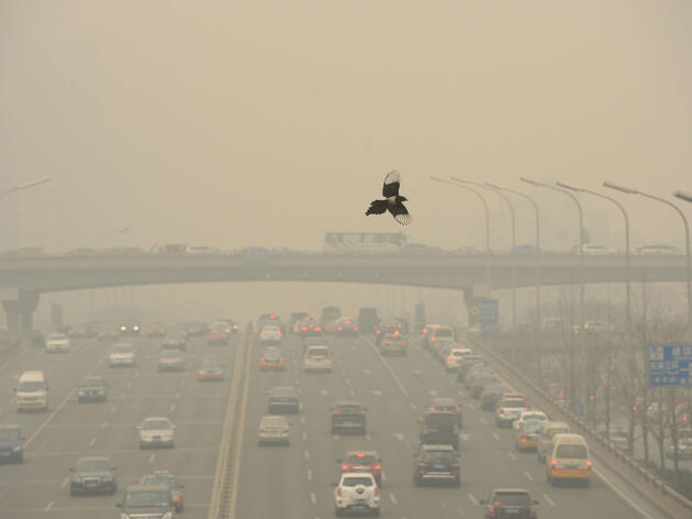 A Common Magpie flies over cars traveling on a road in heavy smog in Beijing, China. JH photo/Imaginechina/AP