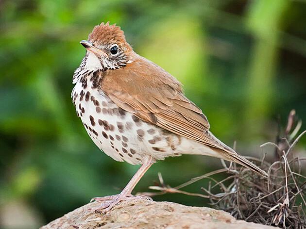 Thirty Percent of North American Bird Species Face Decline Across Seasons