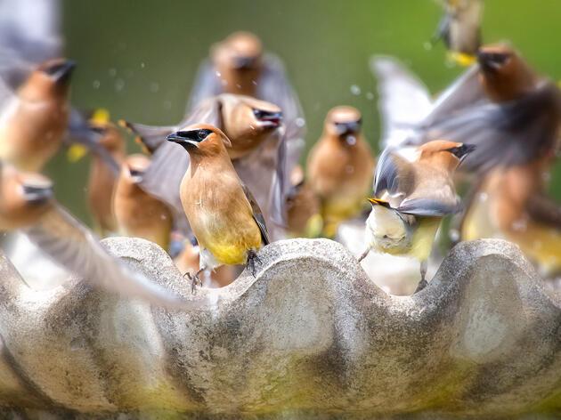 Why You Should Keep Your Birdbath Clean