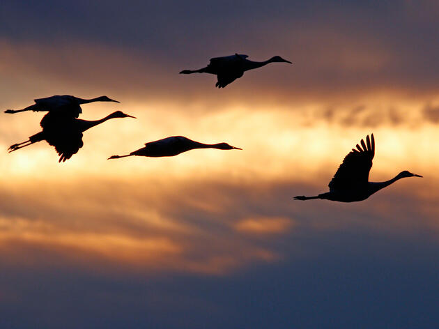 Next Steps Announced in Process to Reinstate and Strengthen Migratory Bird Treaty Act