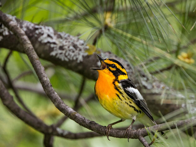 A Field Guide to the Future of North American Birds