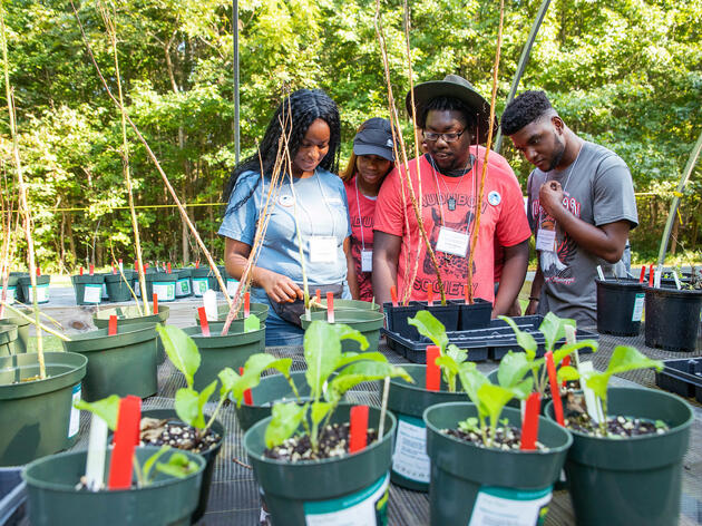 From left: Rust College campus chapter members Claudia Brown, Alia Scott, D'Andre Murray, and Jaylen Reynolds visit the native plant garden sale at the Strawberry Plains Hummingbird Festival. Dominic Arenas/Audubon