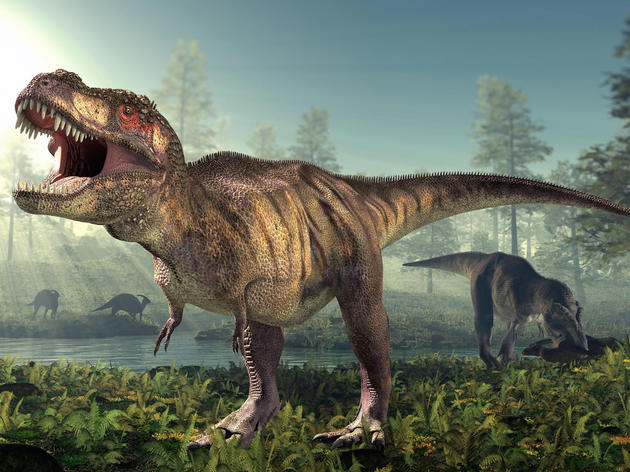 Reimagining of a Tyrannosaurus rex. Science Photo Library/Alamy