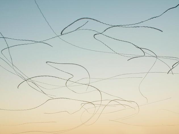 Common Swifts. Xavi Bou