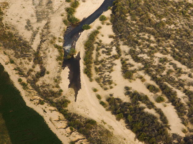Pulses of Water Bring Life to the Famished Colorado River