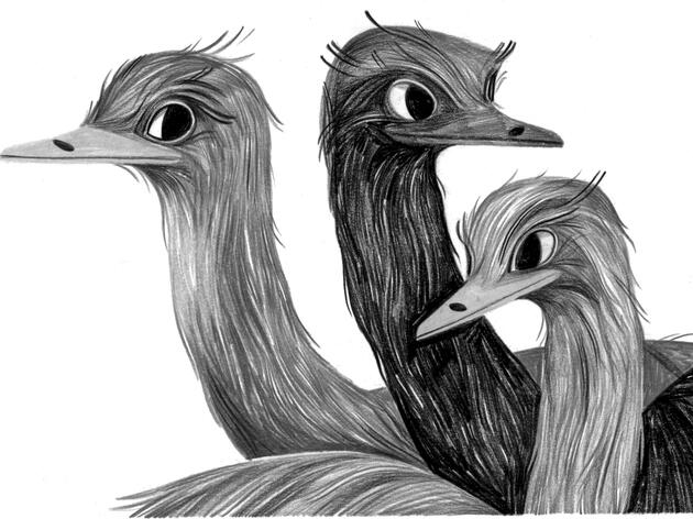 On Emu Pies, Riot Birds, and Roughing the Australian Outback