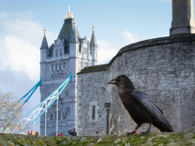 According to legend, ravens act as the Tower's guardians. Tim Moore/Alamy