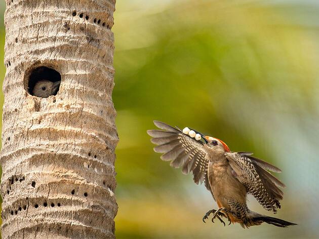 The 2018 Audubon Photography Awards: Top 100