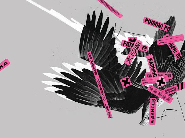 Águila Calva. Ilustración: Mike McQuade; Fotografía: Anthony Goldman/Premios de Fotografía Audubon