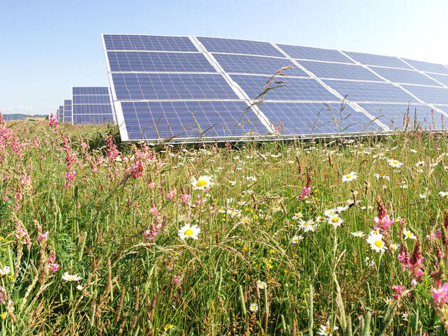 The Westmill Solar Park, a photovoltaic co-op facility in Watchfield, England, is a successful example of how solar panels and native plants can coexist. Guy Parker