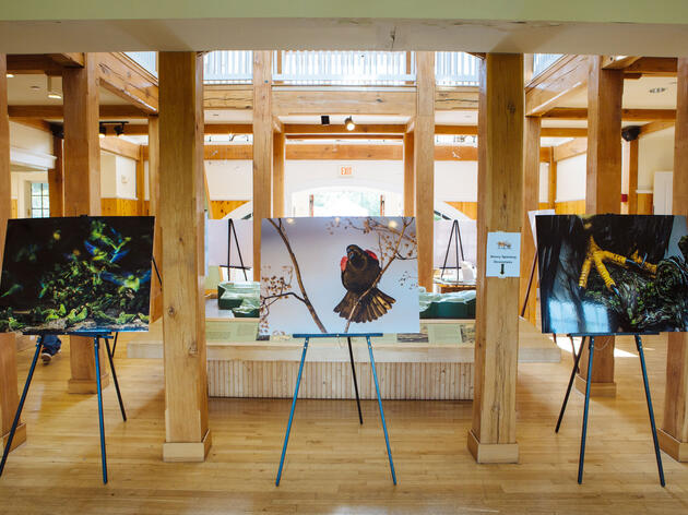 Audubon Photography Award images on display at the 20th Annual Fall Festival and Hawk Watch at the Audubon Center in Greenwich, CT. Angus Mordant