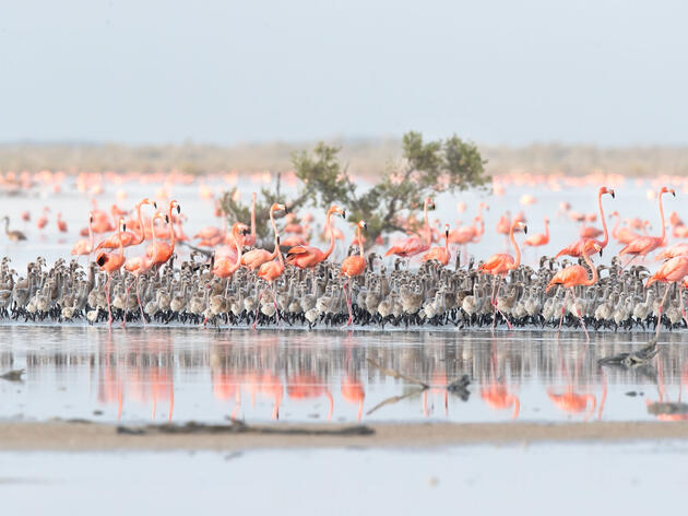 The Bahamas Are Filled With Flamingos Once Again