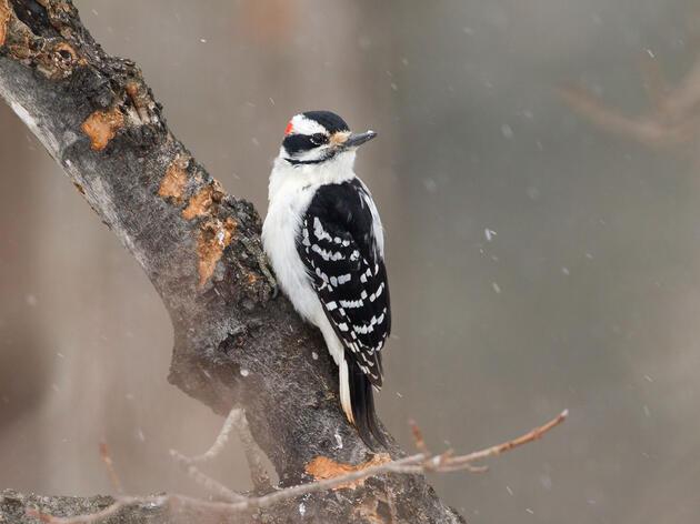 Como preparar el mejor lugar para que se pose un ave y tomarle una fotografía