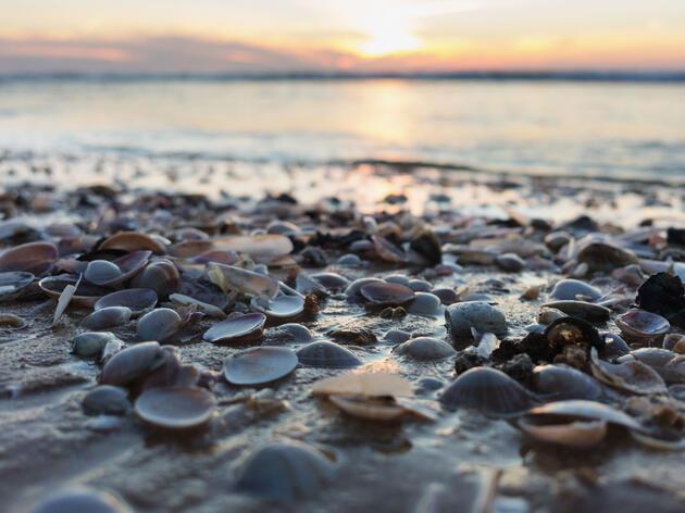 Crear un Mini Océano Para Observar Como el Cambio Climático Afecta a las Conchas Marinas