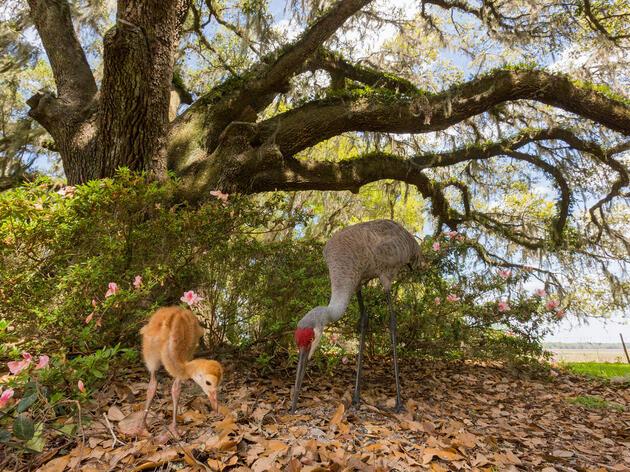 Use a Remote Trigger to Get Your Camera Closer to Birds
