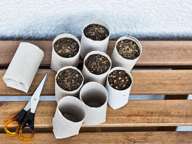 DIY: Make a Pot, Plant Seeds, Grow Bird Food