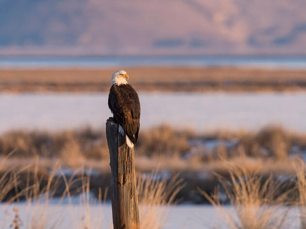 Five Hotspots for Photographing Bald Eagles