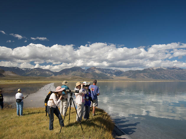 The Mono Basin Bird Chautauqua takes place the third full weekend in June each year in California's Eastern Sierra. Mono Lake Committee, monolake.org
