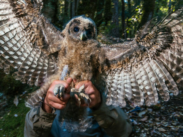Use Your Photography to Support and Advance Conservation