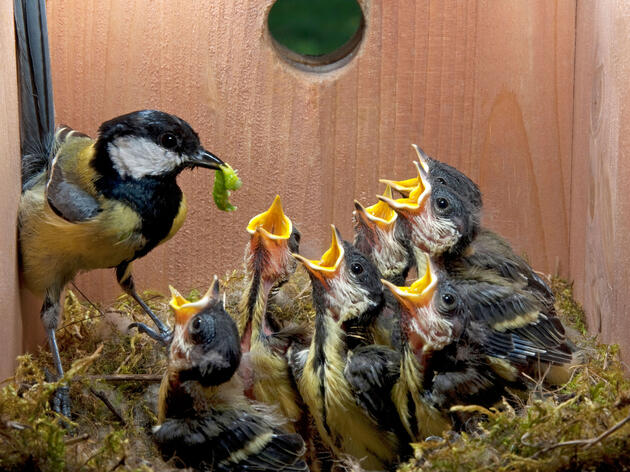 Build a Nest Box to Welcome Spring Birds