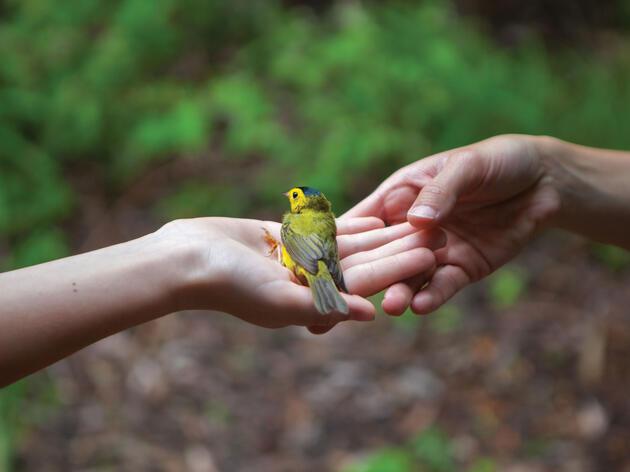 Audubon es una fuerza de la naturaleza, gracias a sus miembros