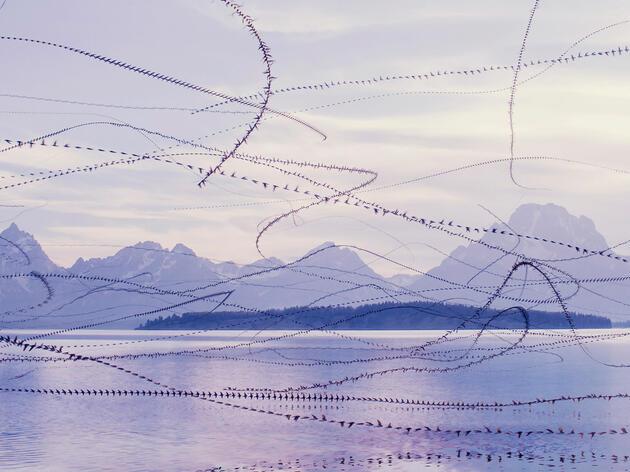 How Xavi Bou Makes His Mesmerizing Portraits of Birds in Flight