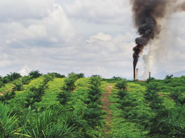 Un molino de aceite de palmera en funcionamiento en una plantación al norte de Sumatra, Indonesia. La producción mundial de aceite se ha duplicado en la última década y se prevé que vuelva a hacerlo para el 2020.