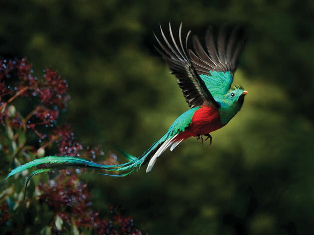 Birding Is Taking Off in Guatemala