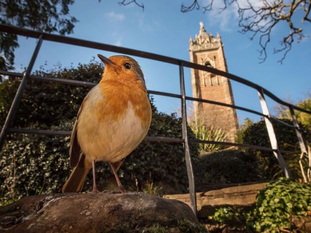 Eche un vistazo a estas fantásticas fotos de aves en lugares urbanos