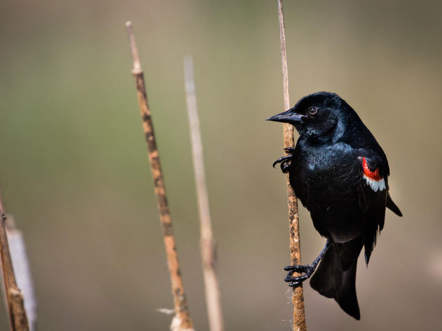 Top Audubon Wins for Birds in 2019: Local Everywhere