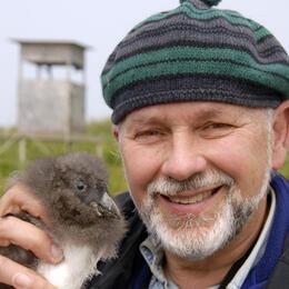 Steve Kress with Atlantic Puffin chick. Steve Kress with Atlantic Puffin chick. Steve Kress/Audubon.