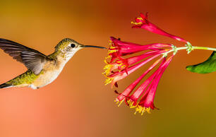 How to Create a Hummingbird-Friendly Yard