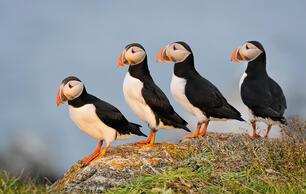Audubon Leadership Convention