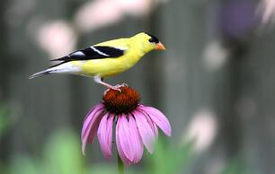 Audubon Working Towards Climate Solutions