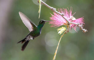 Quiz: What Do You Know About Hummingbirds?