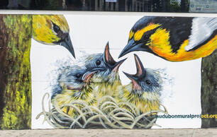 Look at Beautiful Murals of Climate-threatened Birds