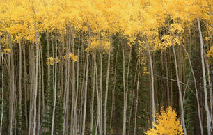 Native Trees With Incredible Fall Foliage—and the Birds That Love Them