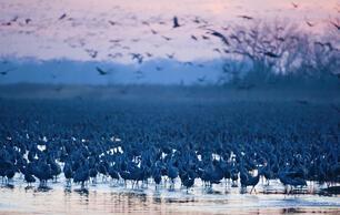 Birding in Nebraska