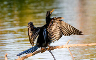 Climate Change Could Cause Shifts in Bird Ranges That Seem Unbelievable Today
