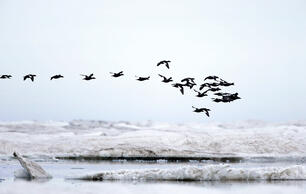 In Their Words: Scientists On Why the Arctic Refuge Must Remain Wild