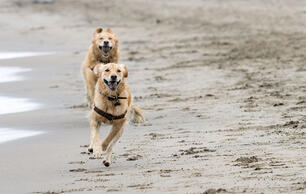 Why Leashing Dogs Is an Easy Way to Protect Birds and Their Chicks