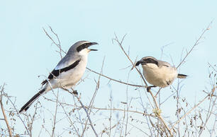Not Sure What NBA Team to Cheer For? Here's our Birder's Guide to the Playoffs.
