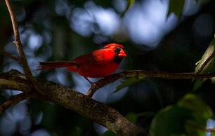 In Quarantine, I Finally Understood the Magic of Birds