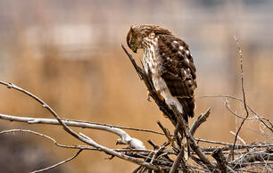 Feds: Expect More Bird Deaths and Endangered Species Under New Rule
