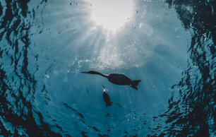 How to Snap Amazing Photos of Birds Under the Water