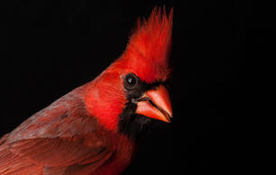 These Vivid Bird Photographs Nearly Fly off the Screen
