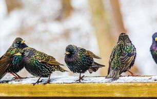 Birdist Rule #72: It's Okay to Dislike Some Birds
